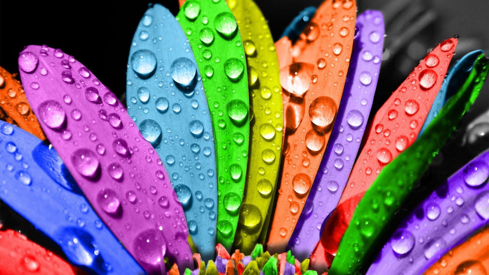 http://3.bp.blogspot.com/-5aHlwsSkIFo/TmdyOI3EIZI/AAAAAAAADlo/MnPr7gQ7r_4/s1600/beautiful_seven_colors_flowers_wallpaper-1920x1080.jpg
