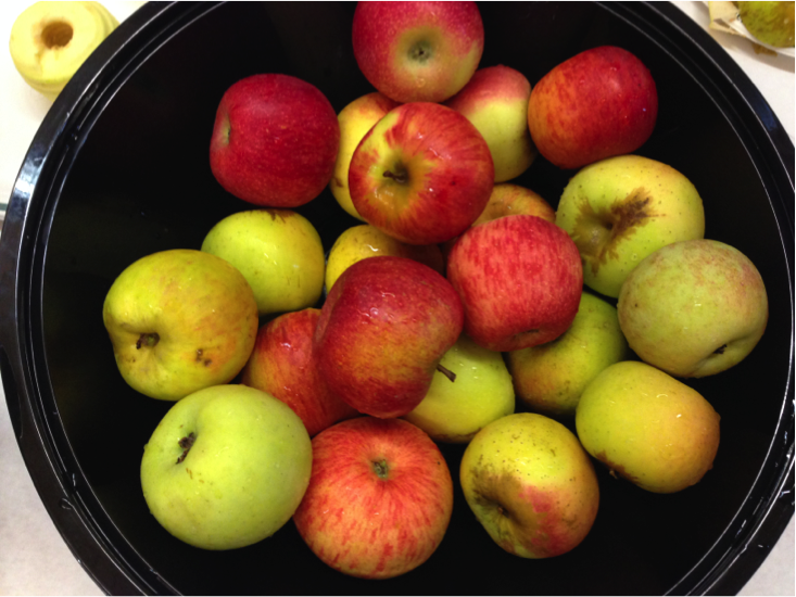 apples week, kindergarten apple unit, crockpot applesauce