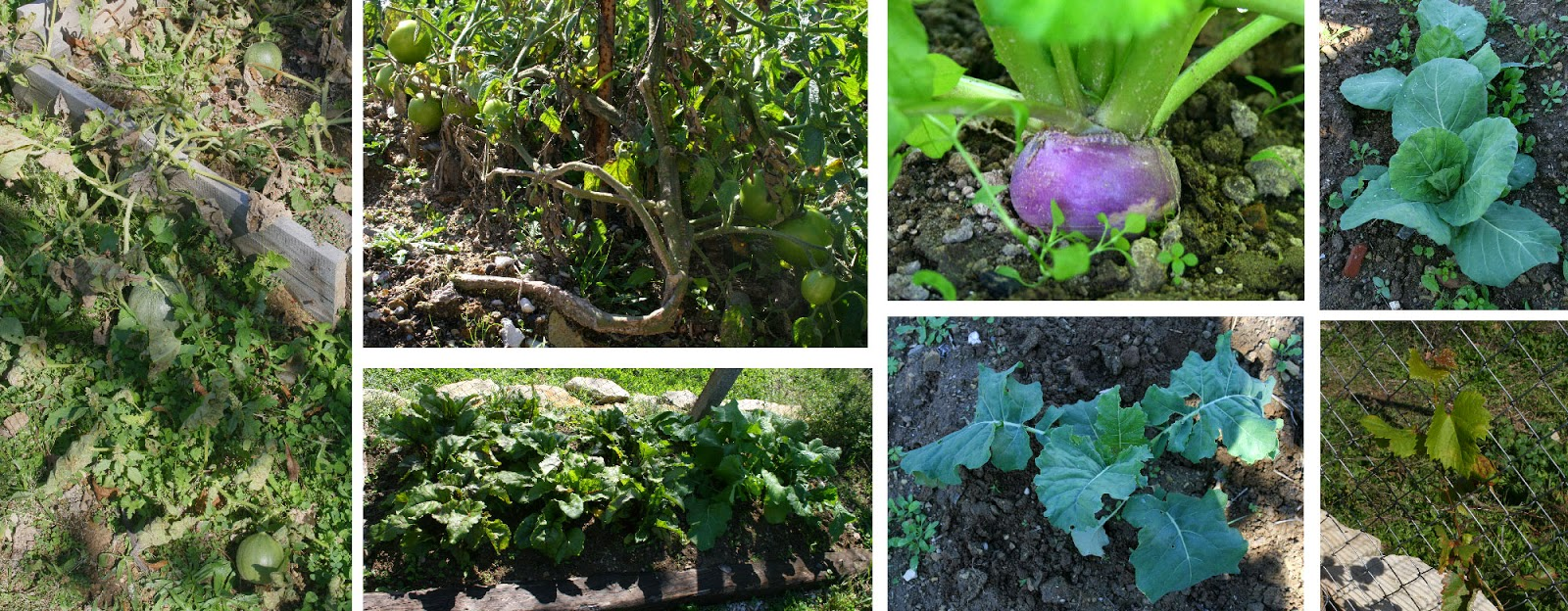 Lots of things growing really well