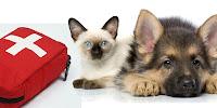 Kit de primeiros socorros para animais
