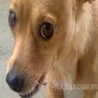 pilandia seu cachorro maconheiro