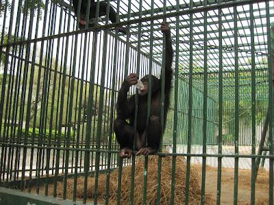 Monos del zoo de Dakar