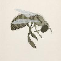 abeja, dibujo