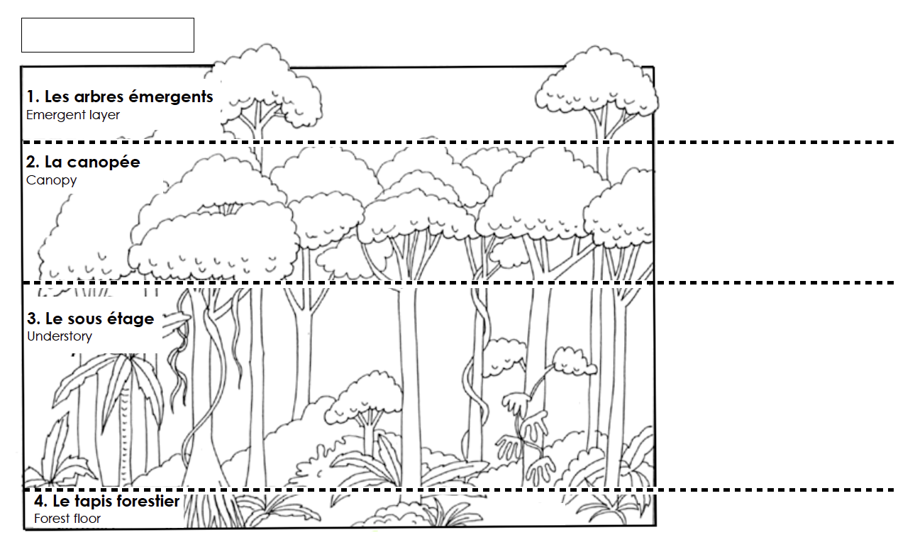 Animals In The Rainforest Layers Printable Pictures to Pin on – Layers of the Rainforest Worksheet