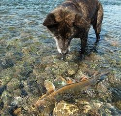 Cães podem comer peixe?