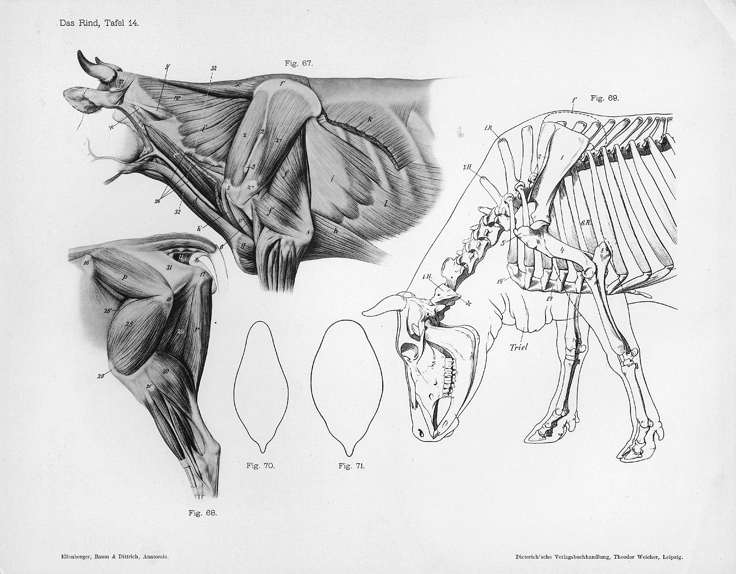 Character and Creature Design Notes: Proper Use of Reference and ...