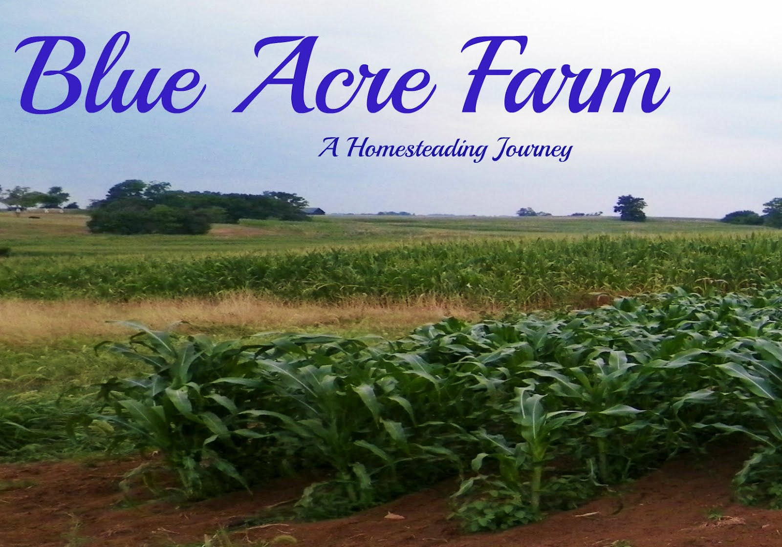 Blue Acre Farm