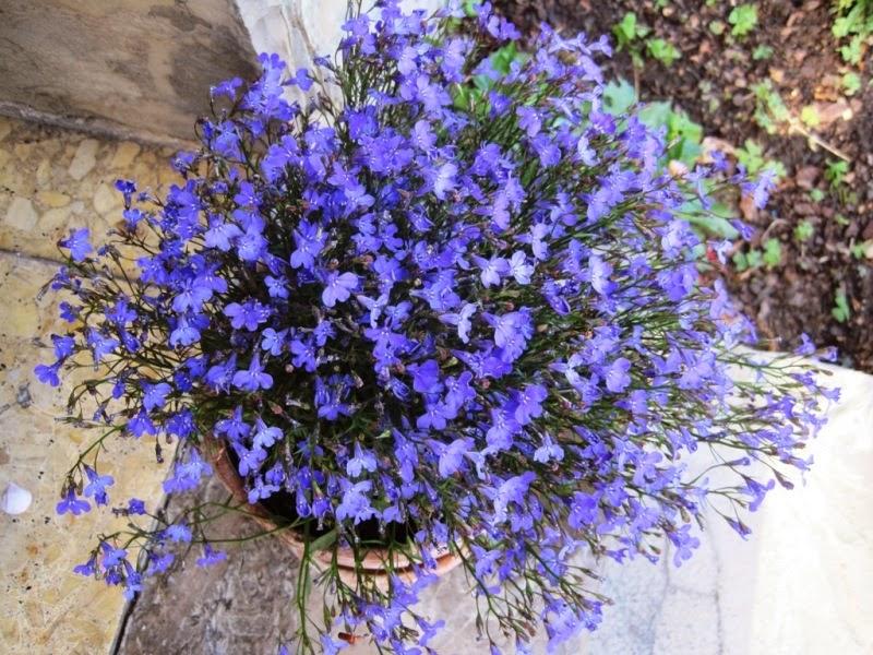 Por el mundo flores for Planta venenosa decorativa