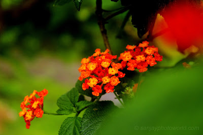 red flower set