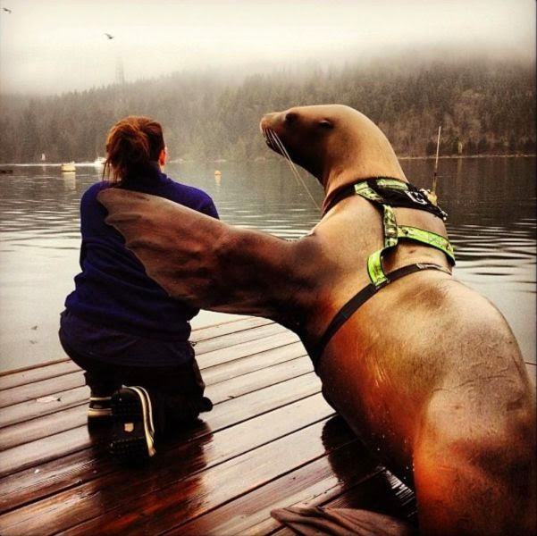 Funny animals of the week - 28 March 2014 (40 pics), seal buddy