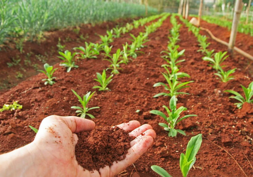Soils soil for Soil in india
