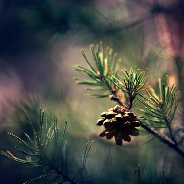 Nature Photography by Pawel Matys