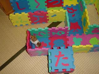 Rest of hamster maze.