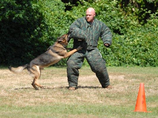 How To Train An Attack Dog From Scratch