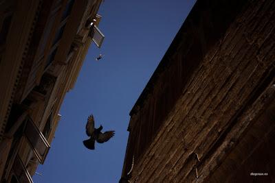 dfhoto publica tus partituras  Paloma volando en una calle de Valleta en Malta, Feliz Año 2013 desde dfhoto