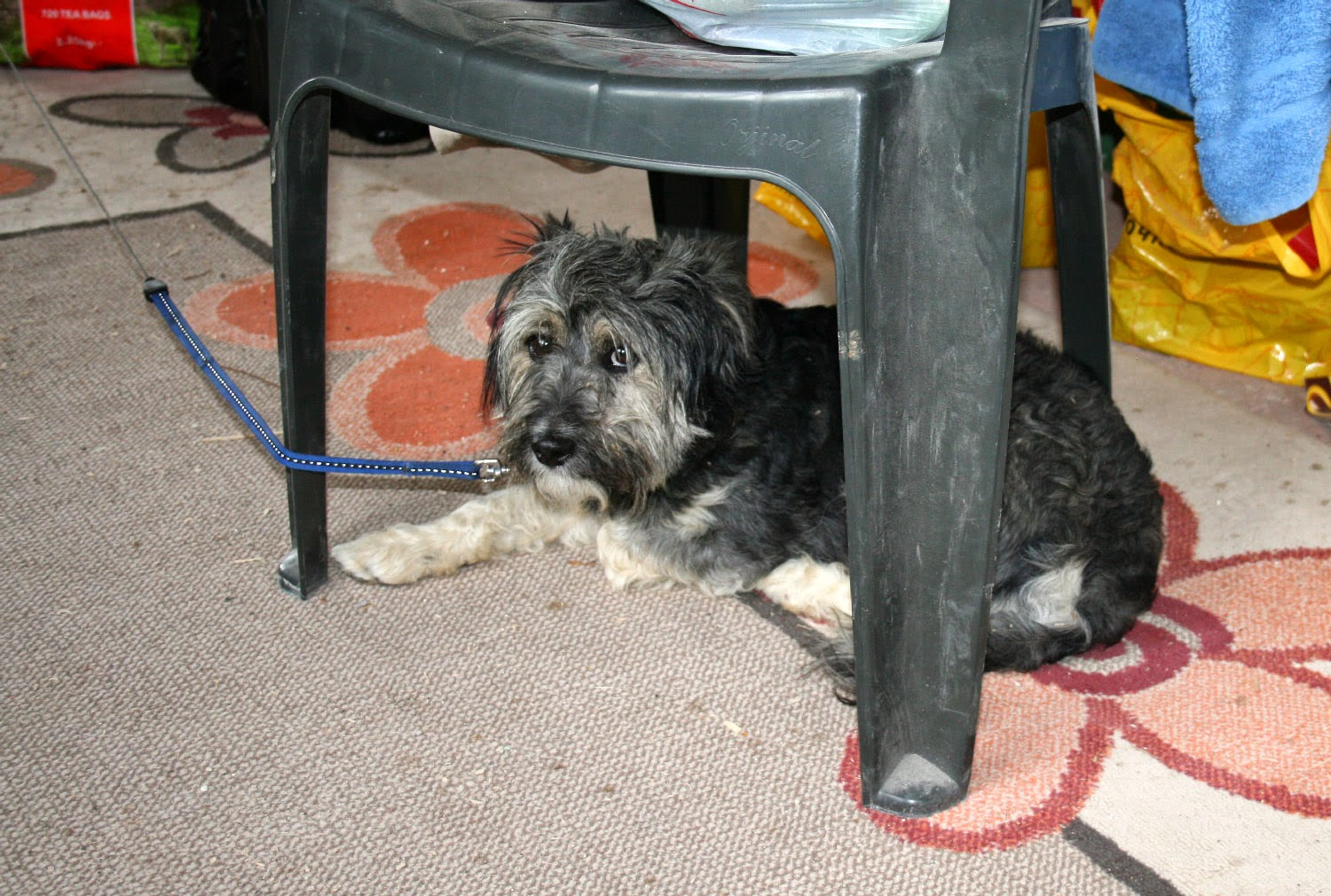 Hiding under the chair