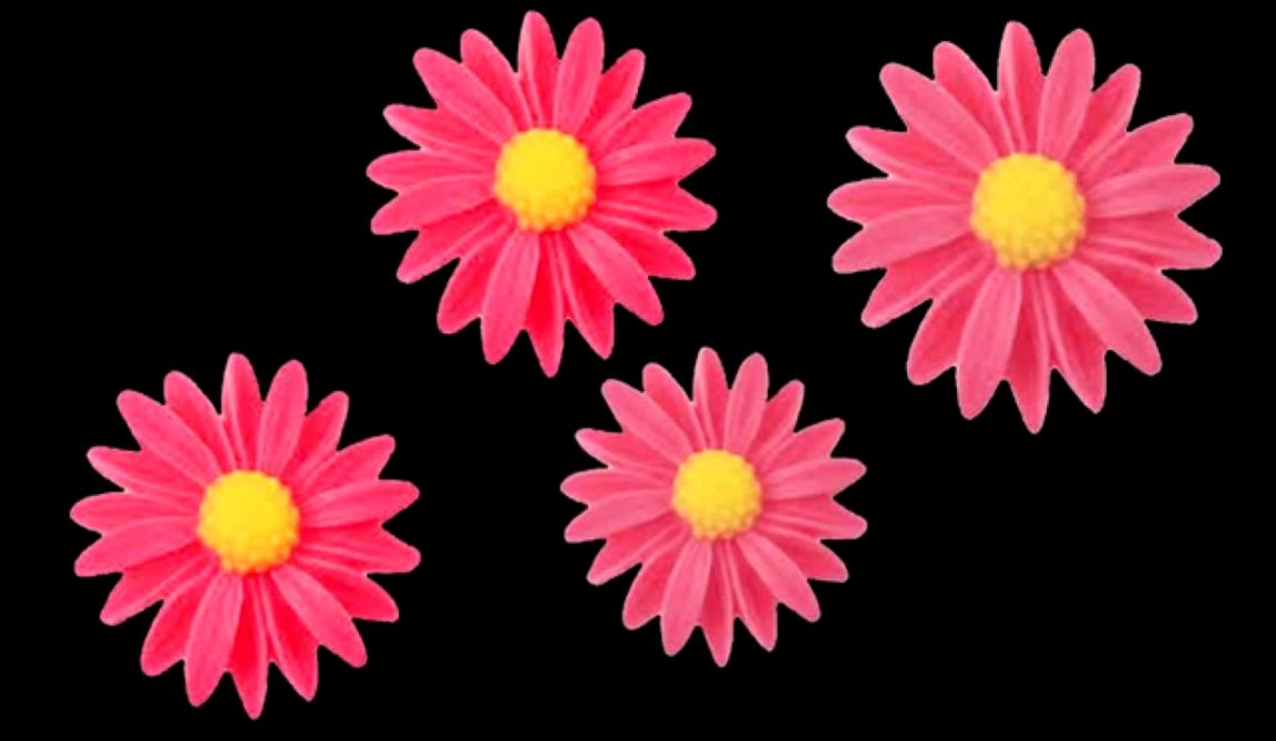 Free HD Fl Loop  Pink Flowers on Black Background   YouTube