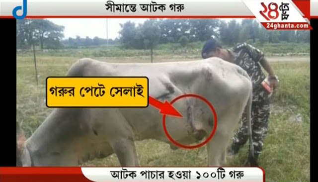 Noticing that all cows had similar pattern of stitches on their stomachs, they suspected foul play.  On using metal detectors to check the cows, they were able to hear a strange sound, similar to that of a ticking clock, reports Zee News.