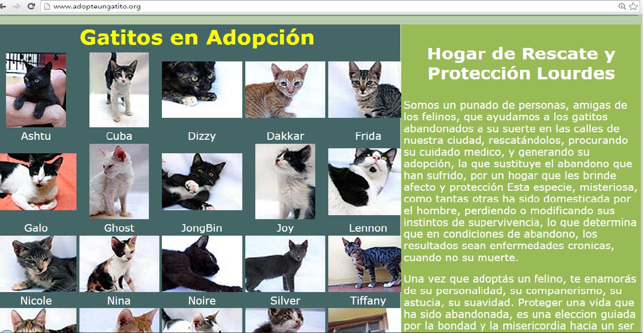 El Hogar de Rescate y Protección Lourdes salva más de 150 gatos por ...