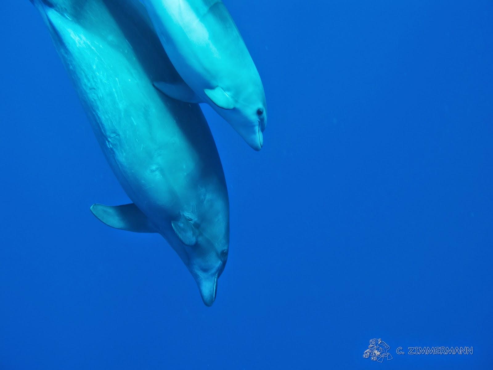 http://www.sciencesetavenir.fr/animaux/20141010.OBS1781/projet-tursiops-a-la-rencontre-des-dauphins-de-la-mer-rouge.html