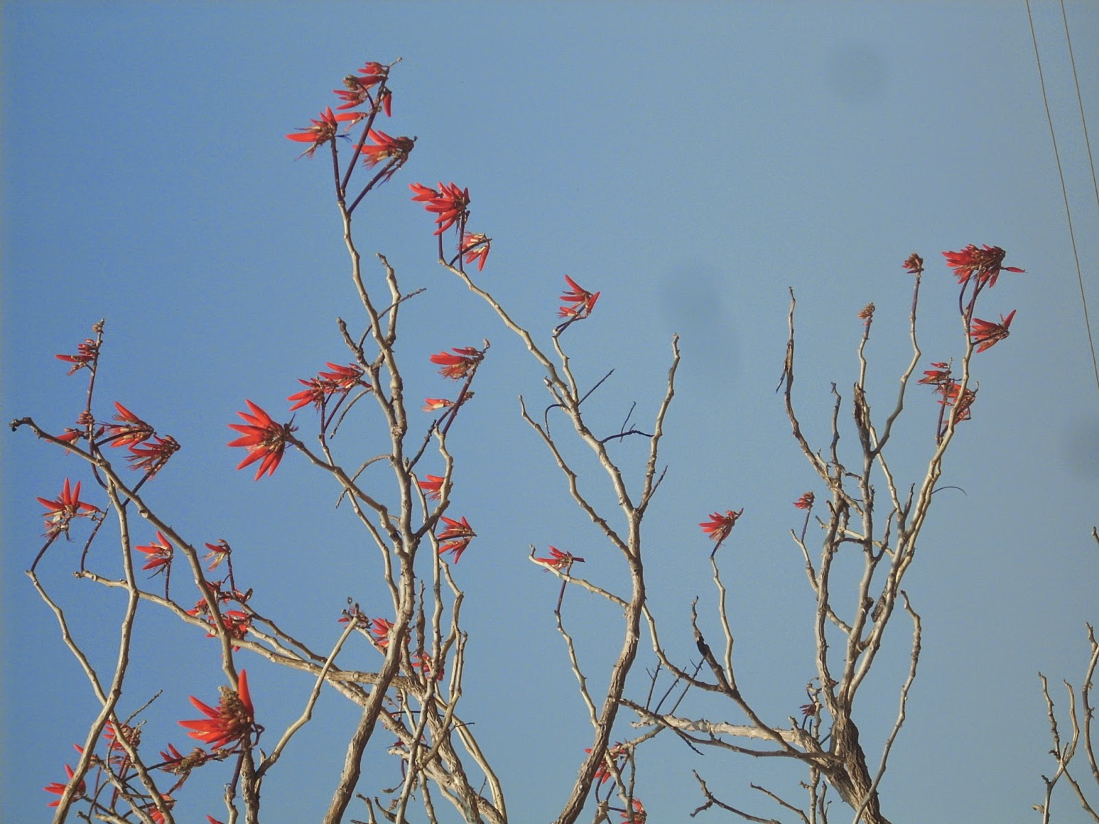 Photosnature Tree Flowers In April 2 Poems Photographs And