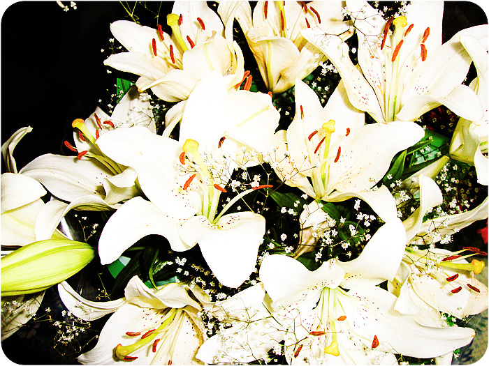 Lilies, LIVE