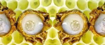 Arı Sütü İçeriği,Arı Sütü Kullanımı,Arı Sütü Faydaları