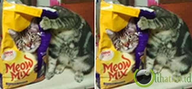 Tipuan Kucing
