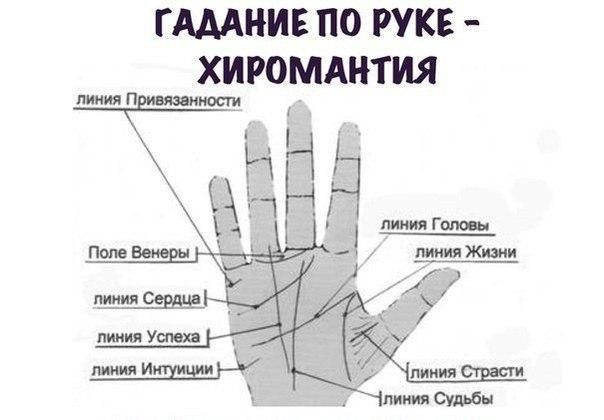 Где находится линия жизни на какой руке