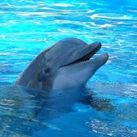 inteligencia de delfín