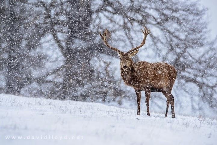 winter landscapes-2