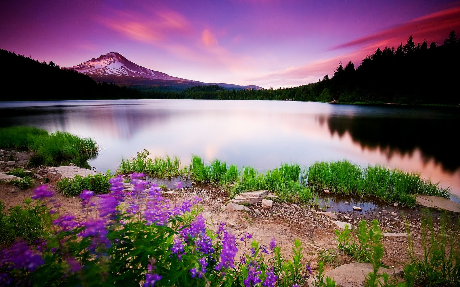 Paisajes Naturales- Montaña nevada junto al lago con flores violeta