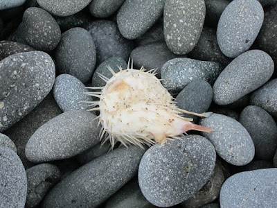 Sea Creatures in Sanxiatai Coast Taitung