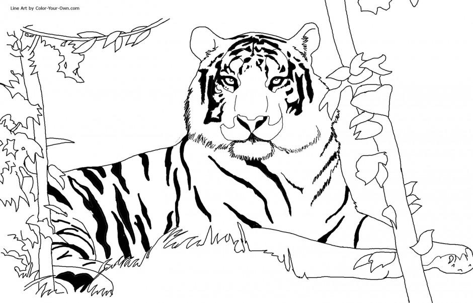 kleurplaten baby tijger
