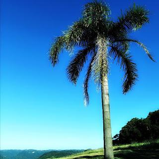 Vista do alto do Morro do Diabo, em Carlos Barbosa - palmeira à beira do morro.