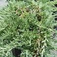 les trois plantes thym, genévrier, la lavande, deux à trois verre capable de faire fondre les calculs rénaux