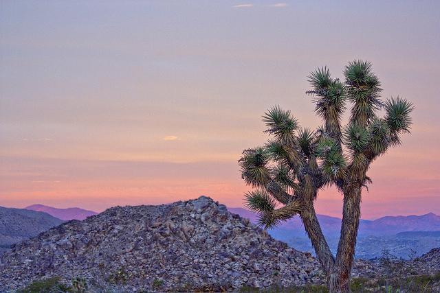 أفضل المزارات السياحية في جنوب كاليفورنيا