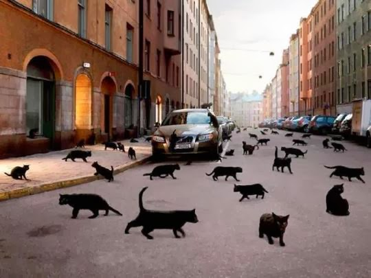 black cats invasion