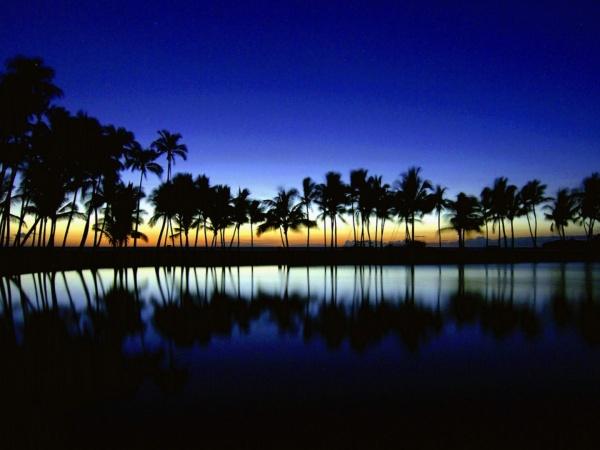 Coconut tree wallpaper desktop - yonemitsu reaction pictures
