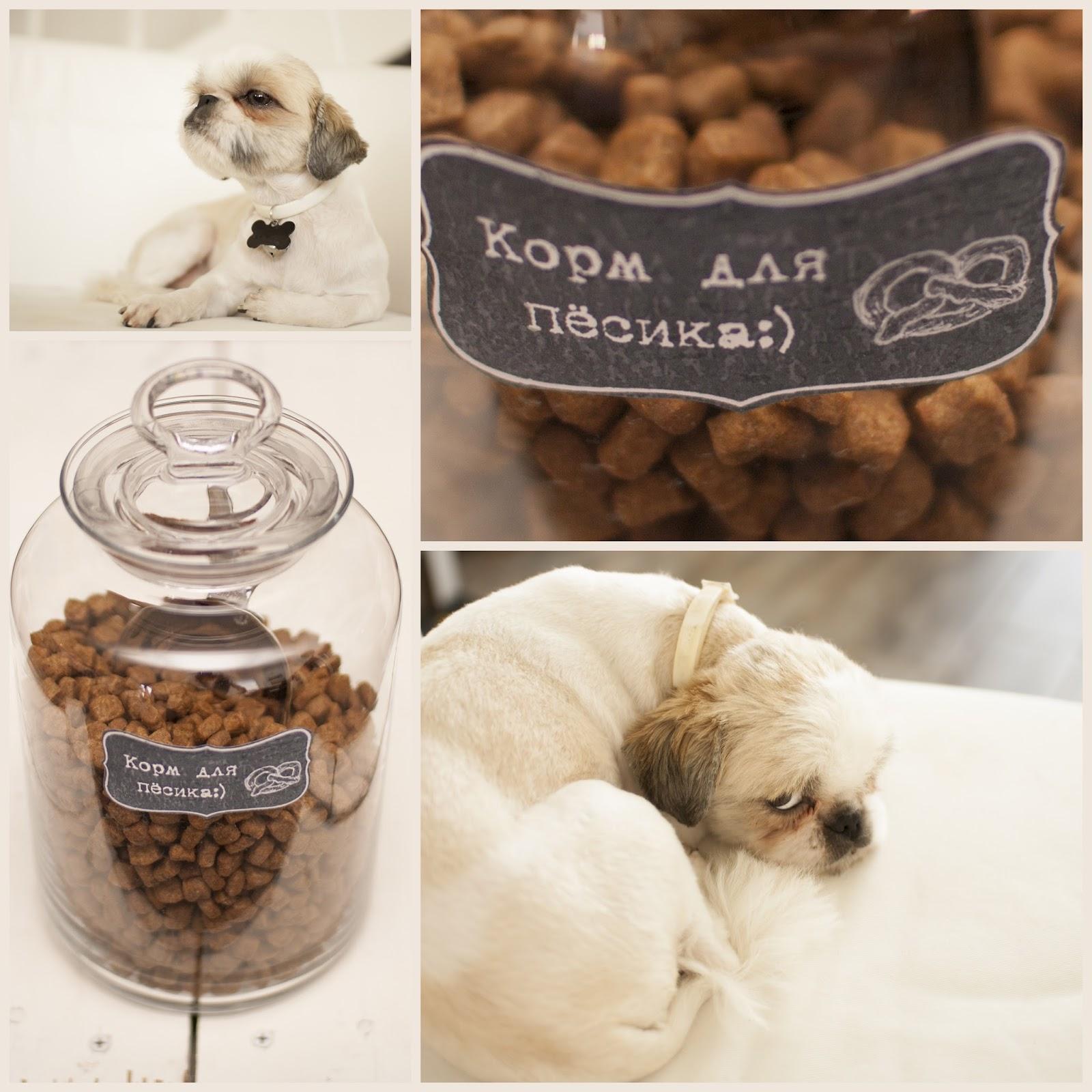 Как хранить корм для собак
