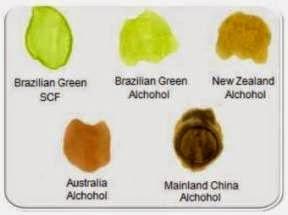 goodfit nano propolis, jenis propolis, brazilian green propolis, propolis terbaik