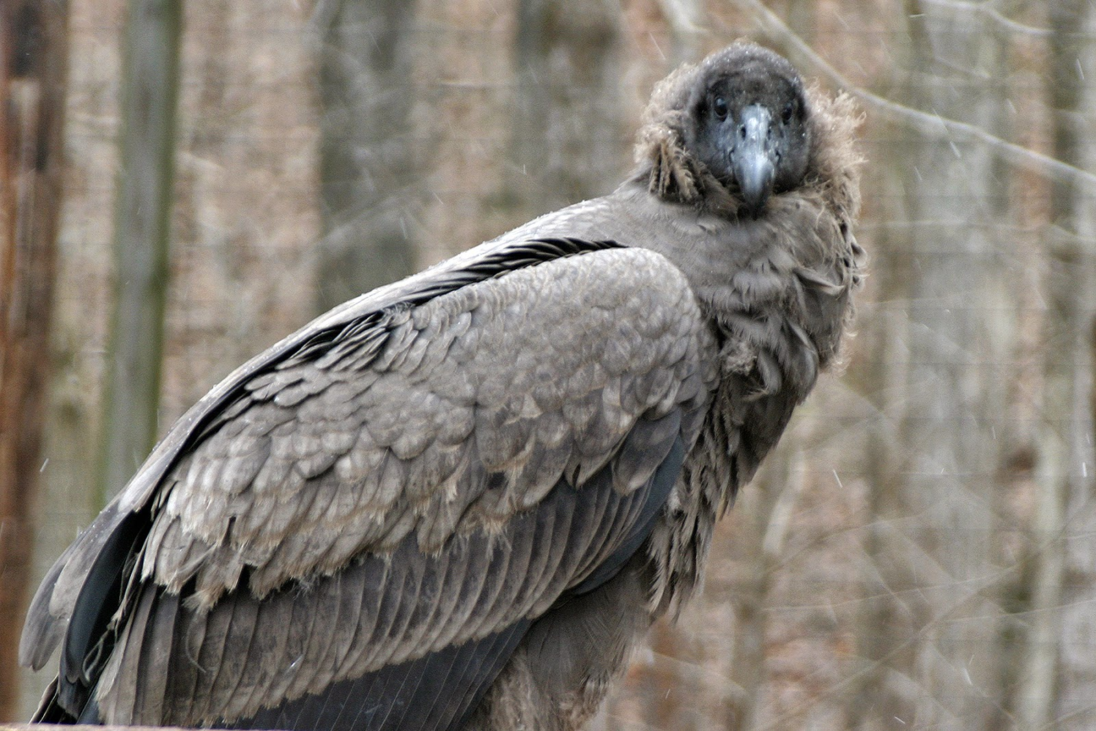 Birds of Patagonia   Patagonia Unbound