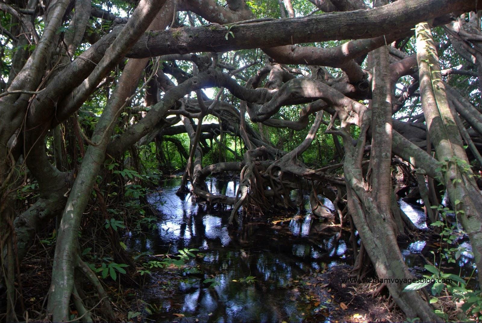 Cây Si trăm nhánh trong rừng Quốc Gia Nam Cát Tiên - Photo Phương Bùi