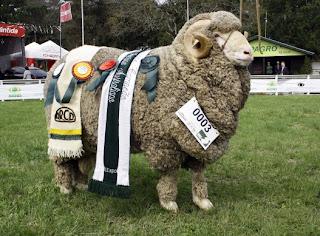 ovinocultura, ovino, lã,  Merino, Brasil