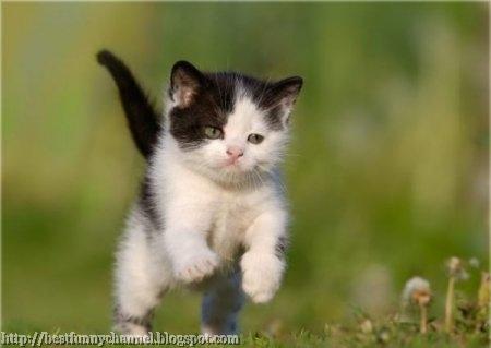Kitten jumping