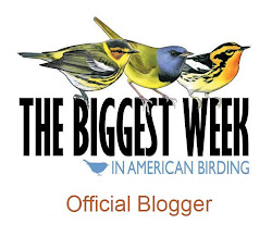The Biggest Week in Birding