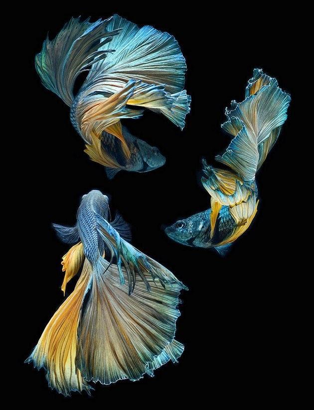 color-fish-2