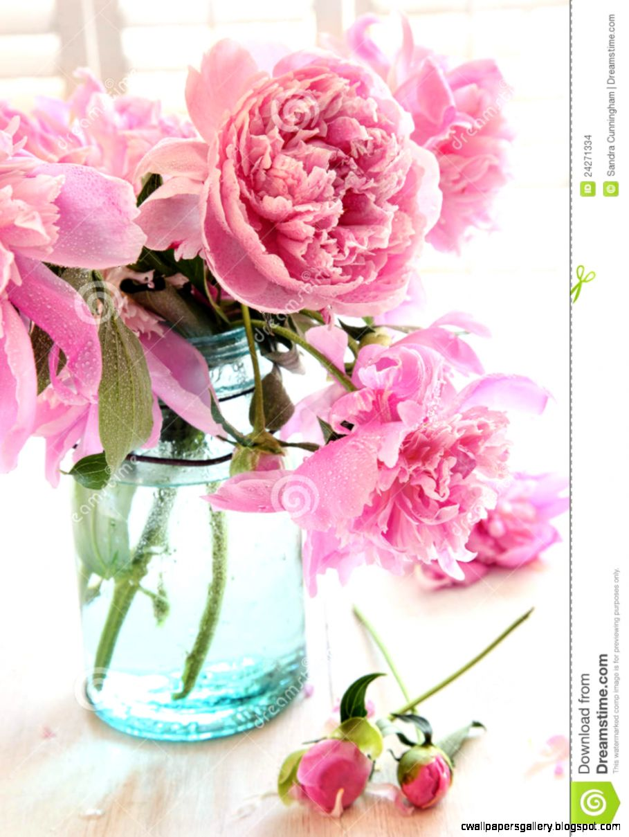 Pink Peonies In Glass Jar Stock Images   Image 24271334
