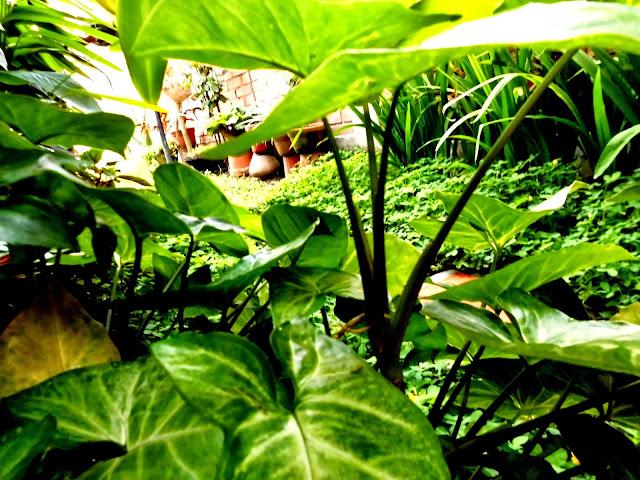 plantas de mi jardín