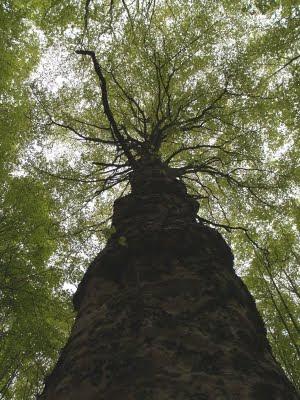 Faggeta nelle foreste casentinesi